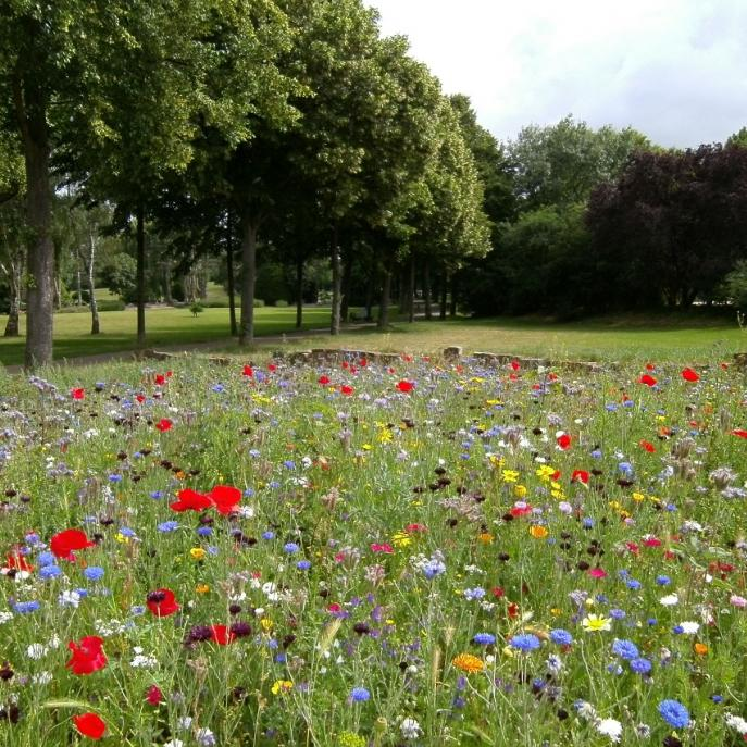 Citizens are invited to shape the future of parks across Dublin city